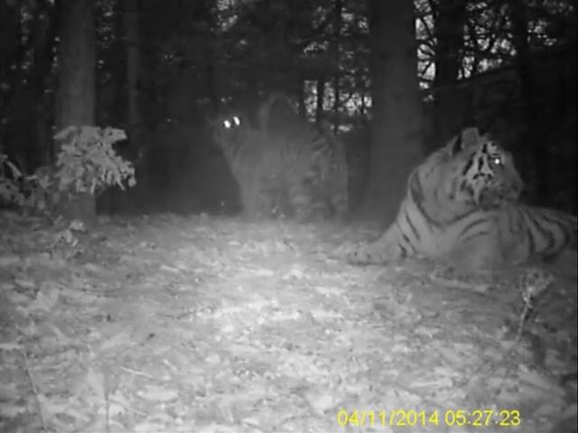 Скрытая камера фото в лесу