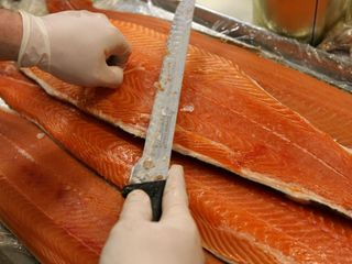 FDA OKs genetically modified salmon