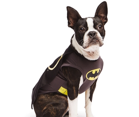 Superheroes dominate top Halloween pet costumes