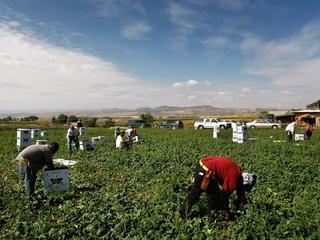 Do undocumented immigrants hurt the economy?