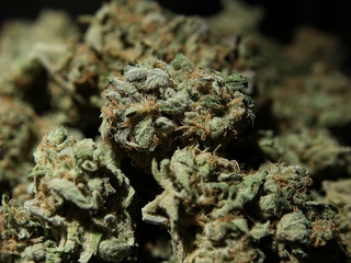 Pennsylvania legalizes medical marijuana