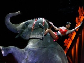 Ringling Bros. elephants quit showbiz