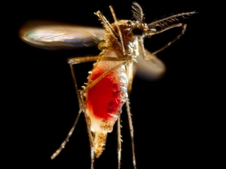 CDC is low on funds to fight Zika
