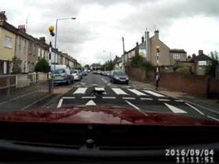 WATCH: Clever cat uses pedestrian crossing