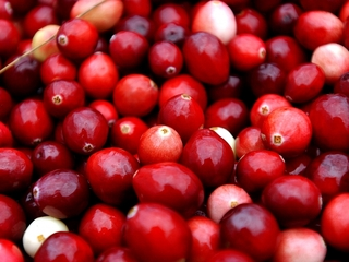 Cranberry juice doesn't prevent UTIs