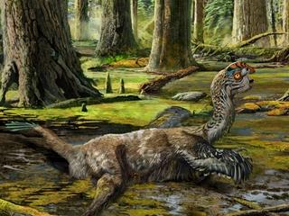 New bird-like dinosaur fossil found in China