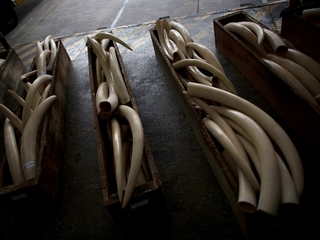 Hong Kong plans to phase out local ivory trade