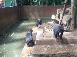 Indonesia zoo under fire for bears' ribs