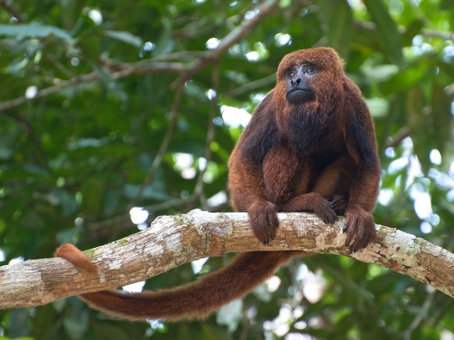 'Monkey selfie' copyright lawsuit ends in settlement