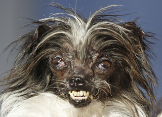 Photos: World's Ugliest Dog Contest 2017