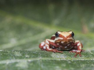How poisonous animals resist their own toxin