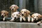 Amazon has sample dog treat boxes