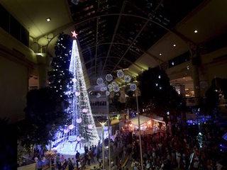 Australian Christmas tree sets record