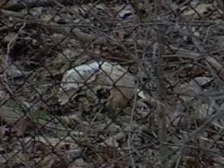 Detroit woman stumbles upon human skull