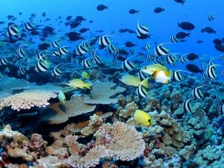 Obama creates largest marine protection area