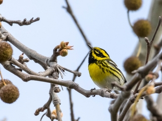 Climate change is altering birds' migrations