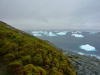 A greener Antarctica isn't always a good thing