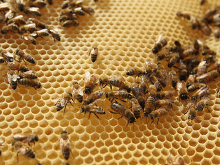 New federal regulations concern local beekeepers