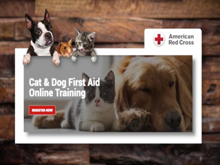 Online class could save your pet's life