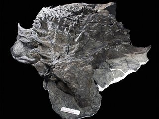 Dinosaur armor might have attracted mates