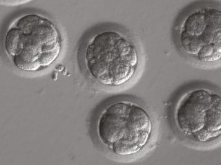 Accuracy of genetic-editing methods questioned