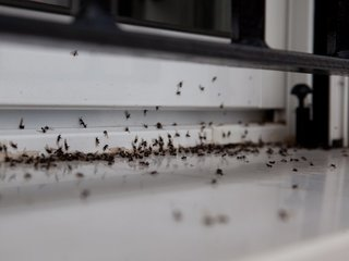Bugs in your home are picky about its interior