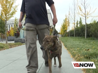 Service dog helps veteran change his life